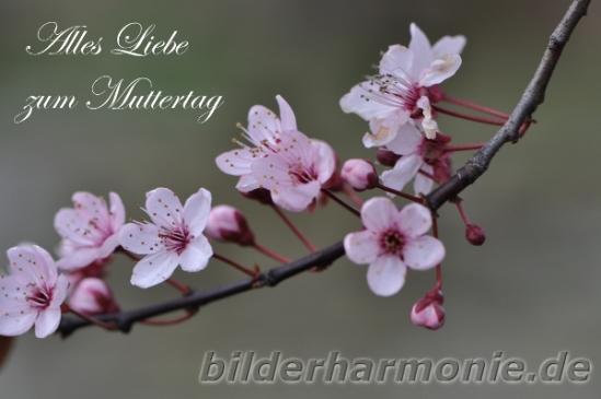 Zum Muttertag 2012