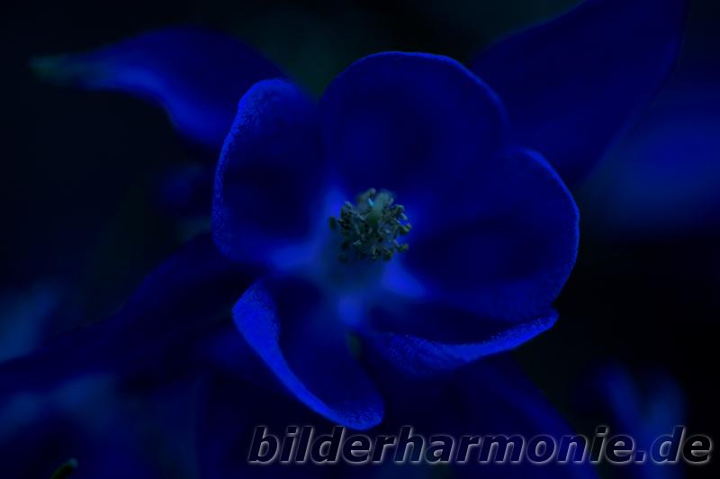 Leuchten der Natur - blau/Glowing of Nature - blue