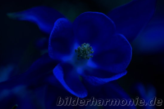 Leuchten der Natur - blau/Glowing of Nature - blue