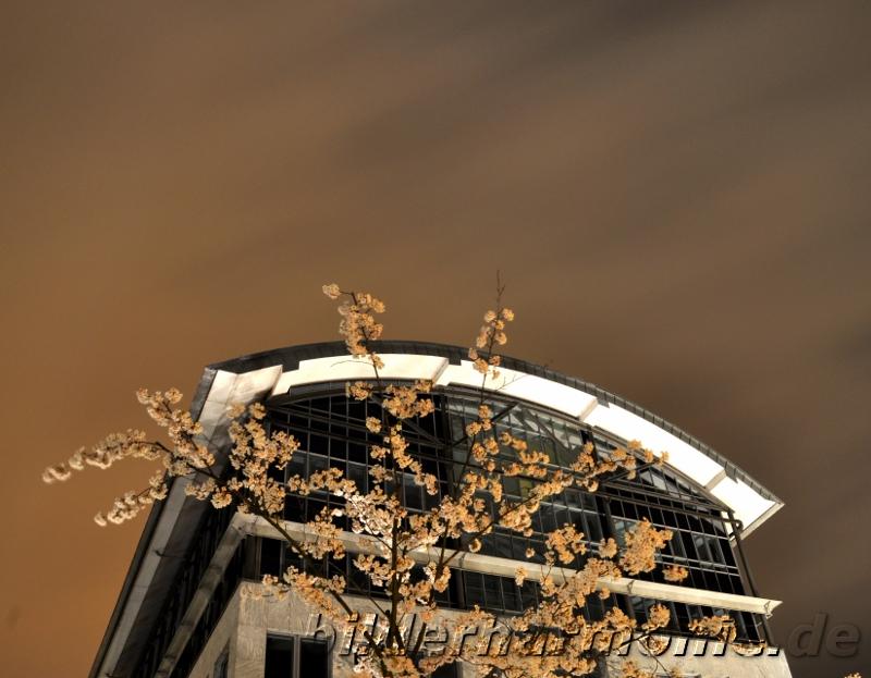 Natur trifft Architektur/Nature meets Architecture