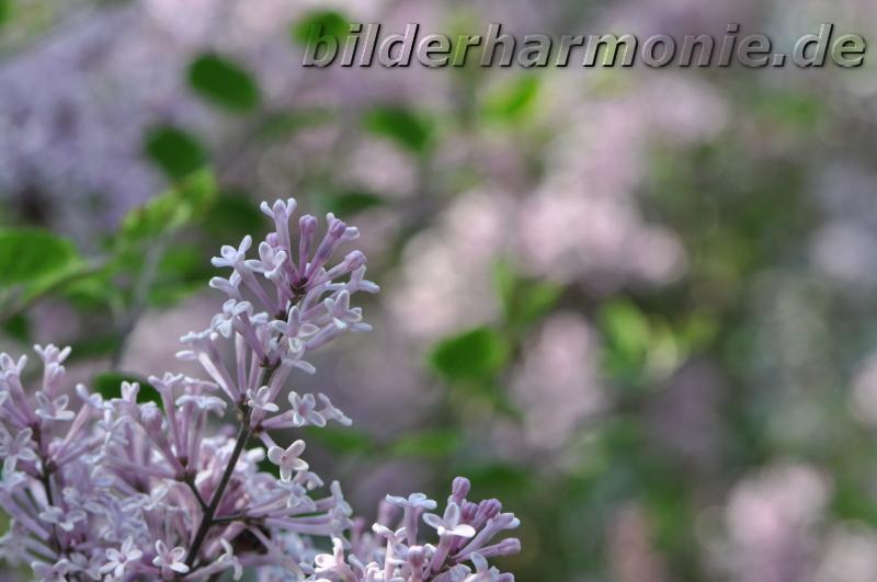 Kaleidoskop der Natur - violett/Kaleidoscope of Nature - violet